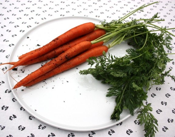 CARROTS SOLARI - A SPECTACULAR EMBARRESSMENT